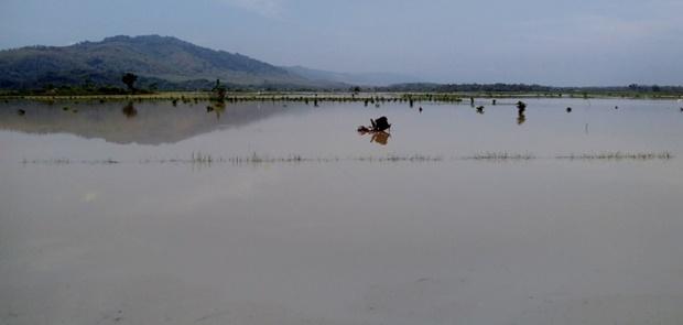 Banjir Merendam Sawah, Mentan Jamin Indonesia Surplus Beras