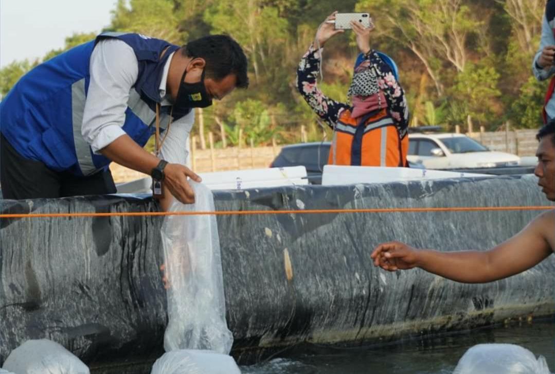 Patut Ditiru, Tambak Udang Di Pacitan Jadi Solusi Ekonomi Saat Pandemi