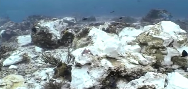 Walhi Desak Pemda Tingkatan Pengawasan Maritim Bidangan Ekologi