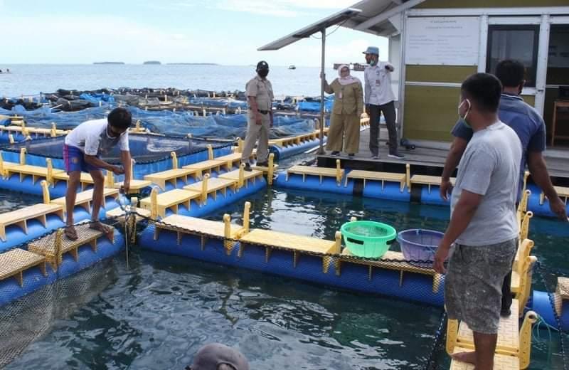 Nelayan Kepulauan Seribu Terima Bantuan 60 Ribu Benih Ikan Konsumsi