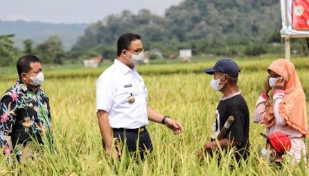 Panen Padi di Sumedang, Gubernur Anies Pastikan Kerja Sama Antardaerah Saling Menguntungkan