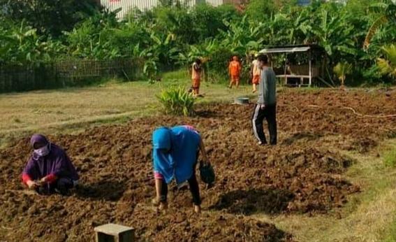 Asyiknya Berkebun Di Pojok Utara Jakarta