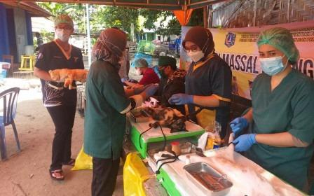 107 Hewan Penular Rabies di Pulau Sebira Divaksin
