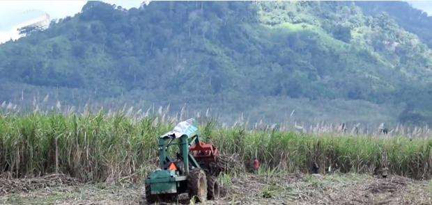 Asosiasi Gula Yogyakarta Mengeluh Masuknya Gula Import