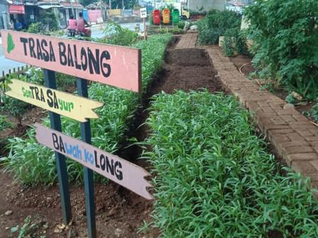 Warga Manfaatkan Kolong Flyover Cipinang ditanami Sayuran
